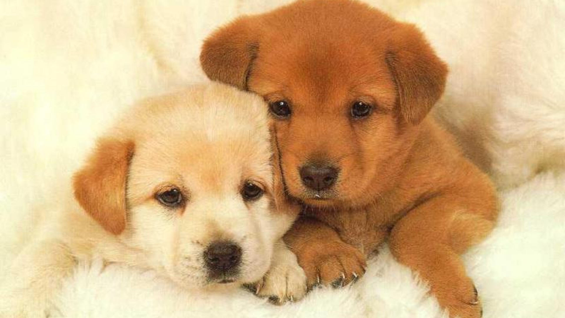 Puppy Wallpapers Free Group  83   Puppy Wallpaper