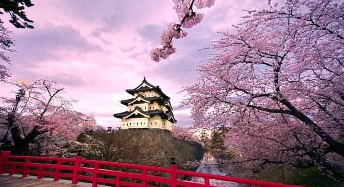 66 Japanese Cherry Blossom