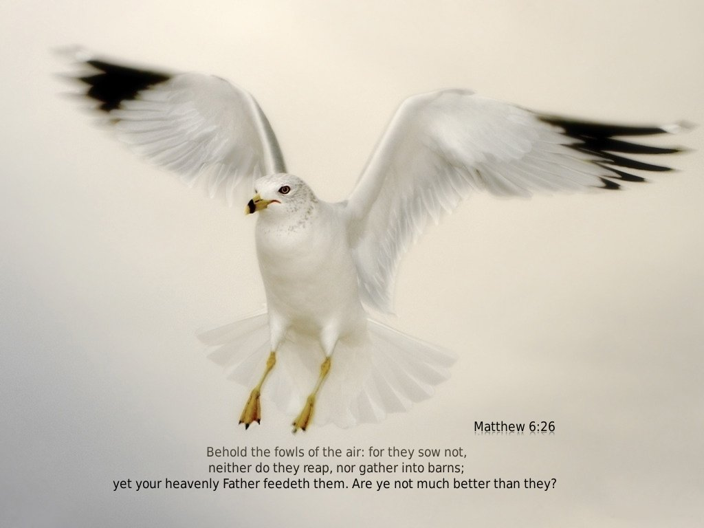 Matthew 6 26 Wallpaper