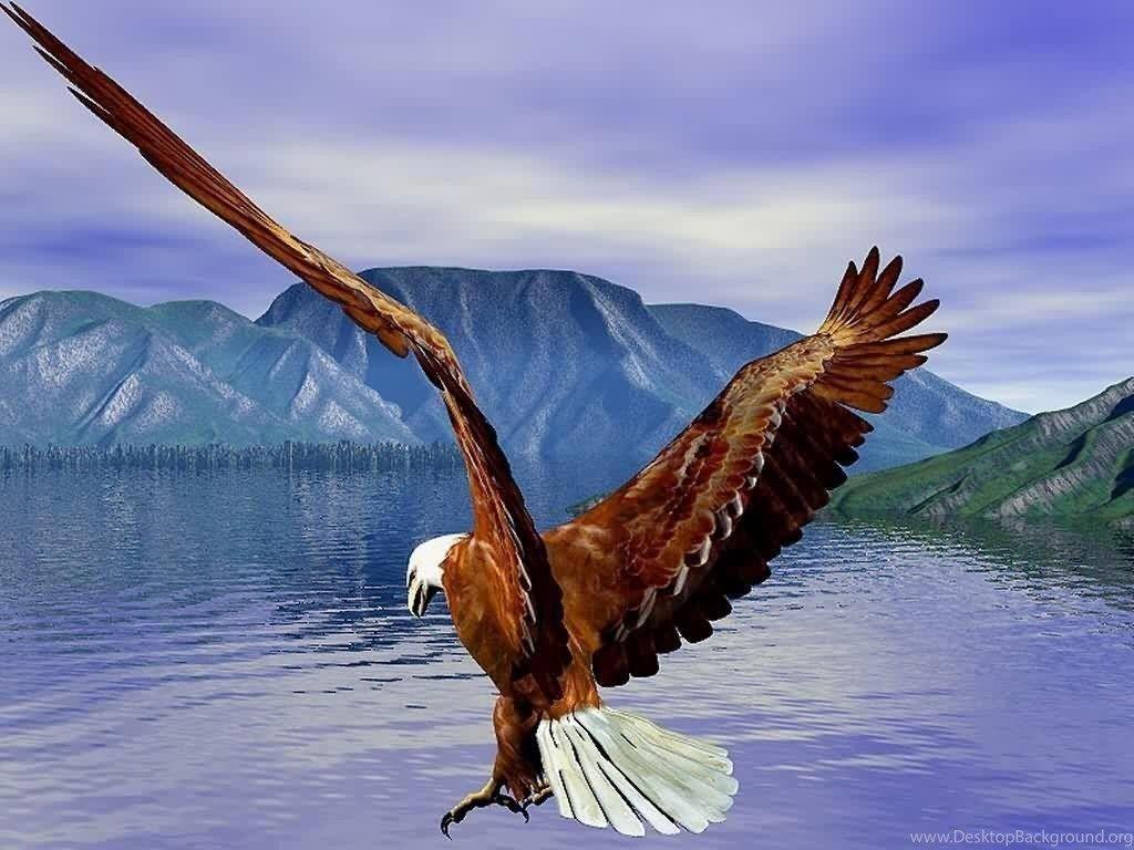 Bald Eagle Hd Wallpapers