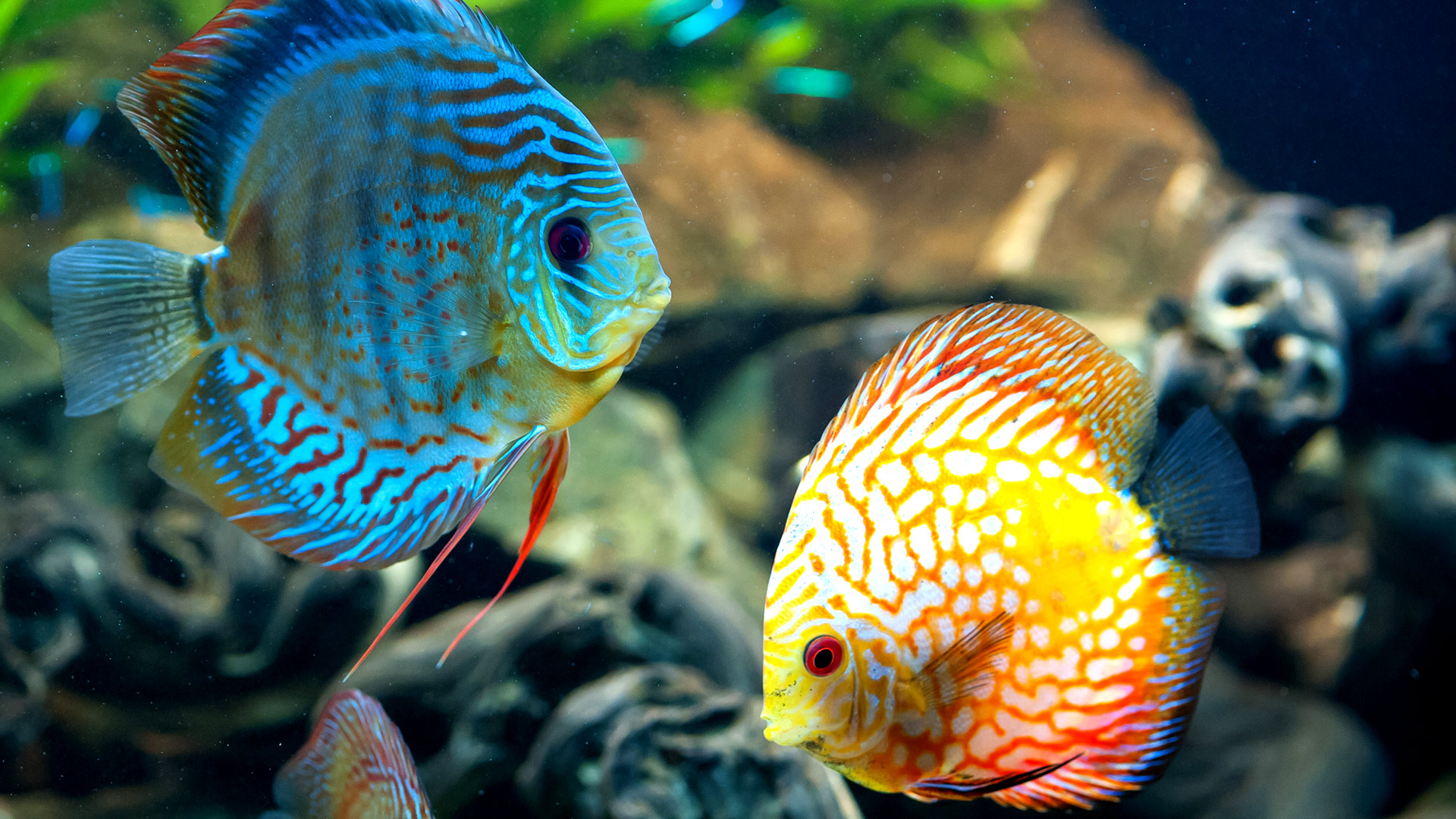 Fish Wallpapers Top Free Fish Backgrounds Wallpaperaccess