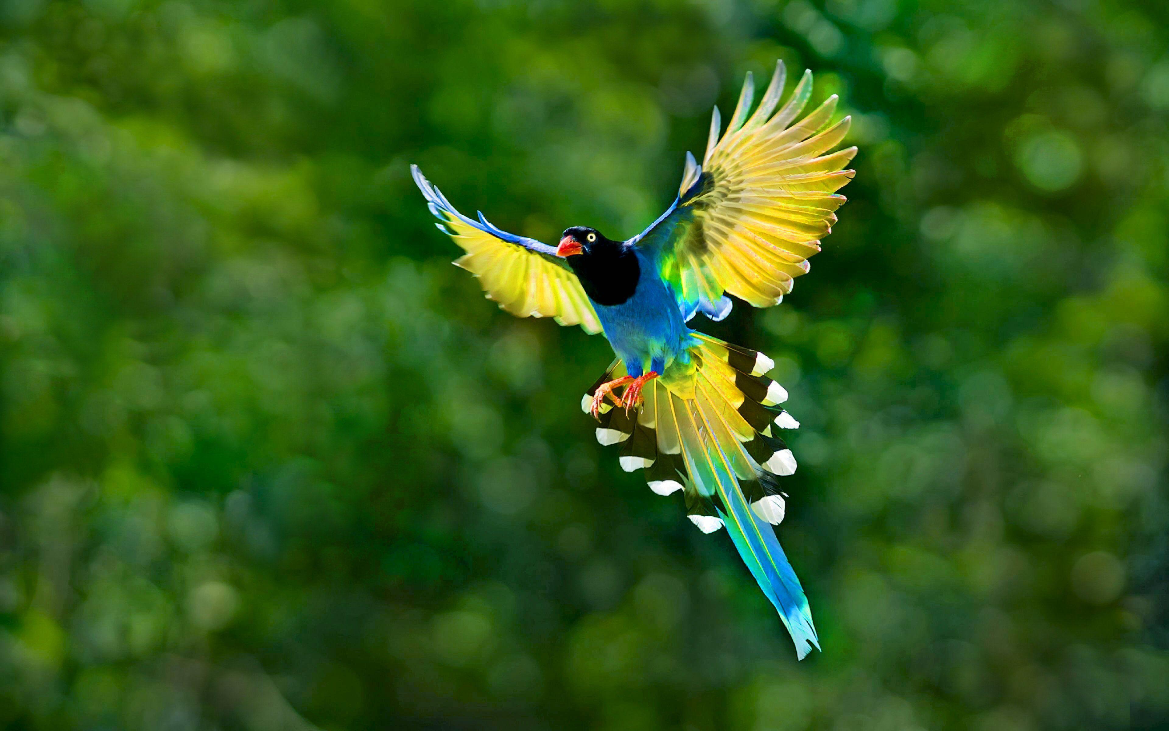 Bird Wallpapers Top Free Bird Backgrounds Wallpaperaccess