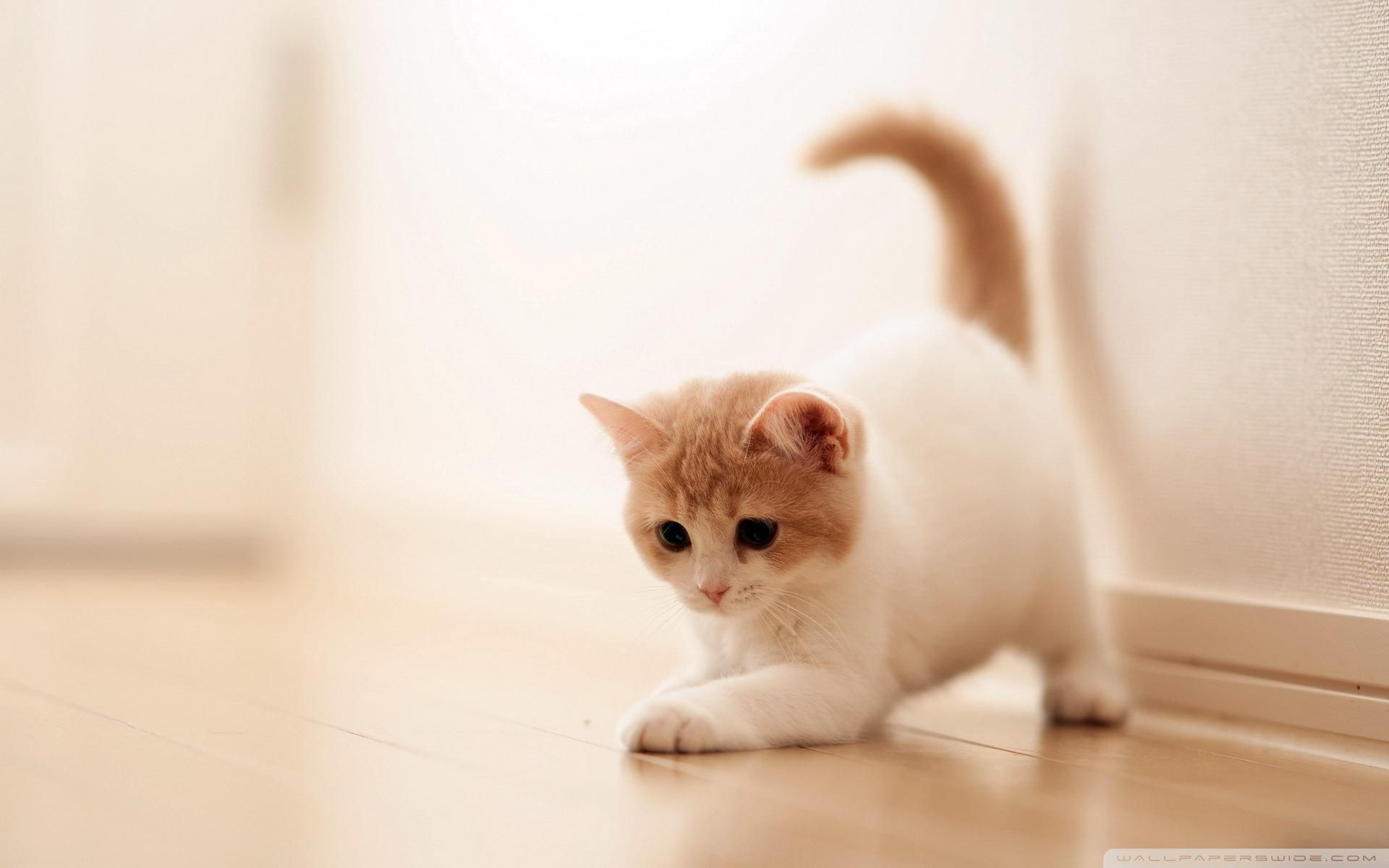 Cute Cat Hd Wallpapers Top Free Cute Cat Hd Backgrounds Wallpaperaccess