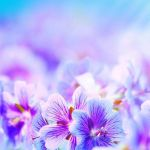 Most Beautiful Flowers Wallpapers Top Free Most Beautiful Flowers Backgrounds Wallpaperaccess