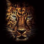 Black Jaguar 4k Wallpapers Top Free Black Jaguar 4k Backgrounds Wallpaperaccess