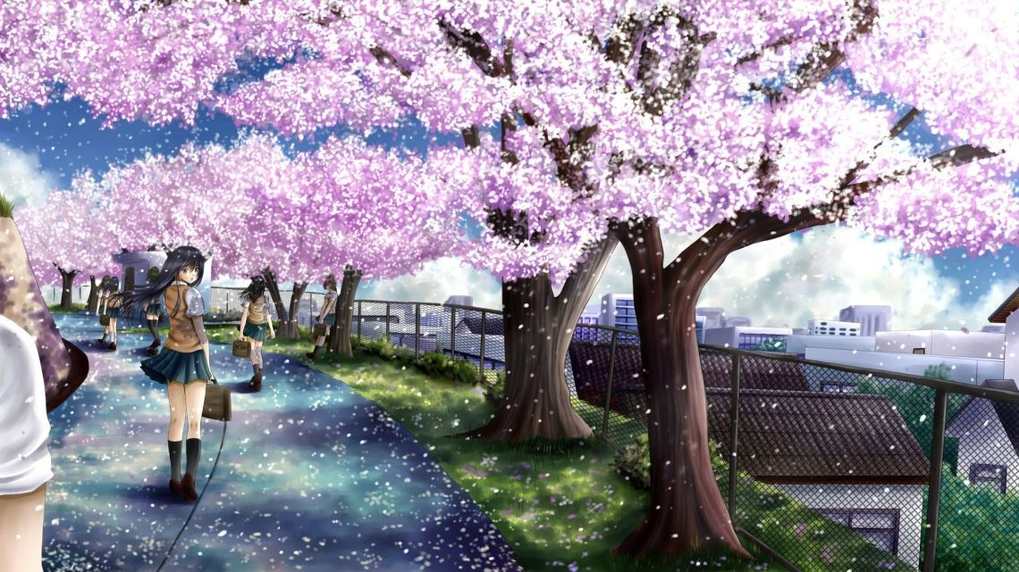 Anime Cherry Blossom Wallpapers Top Free Anime Cherry Blossom Backgrounds Wallpaperaccess
