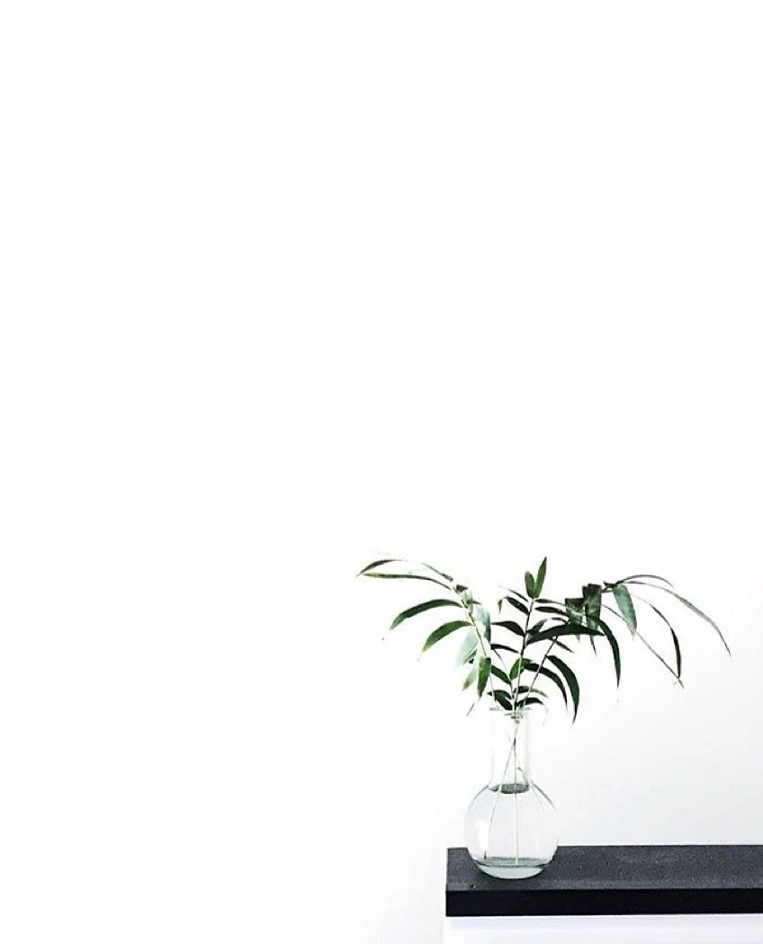 Download and use 100,000+ white background stock photos for free. White Aesthetic Plants Wallpapers - Top Free White ...