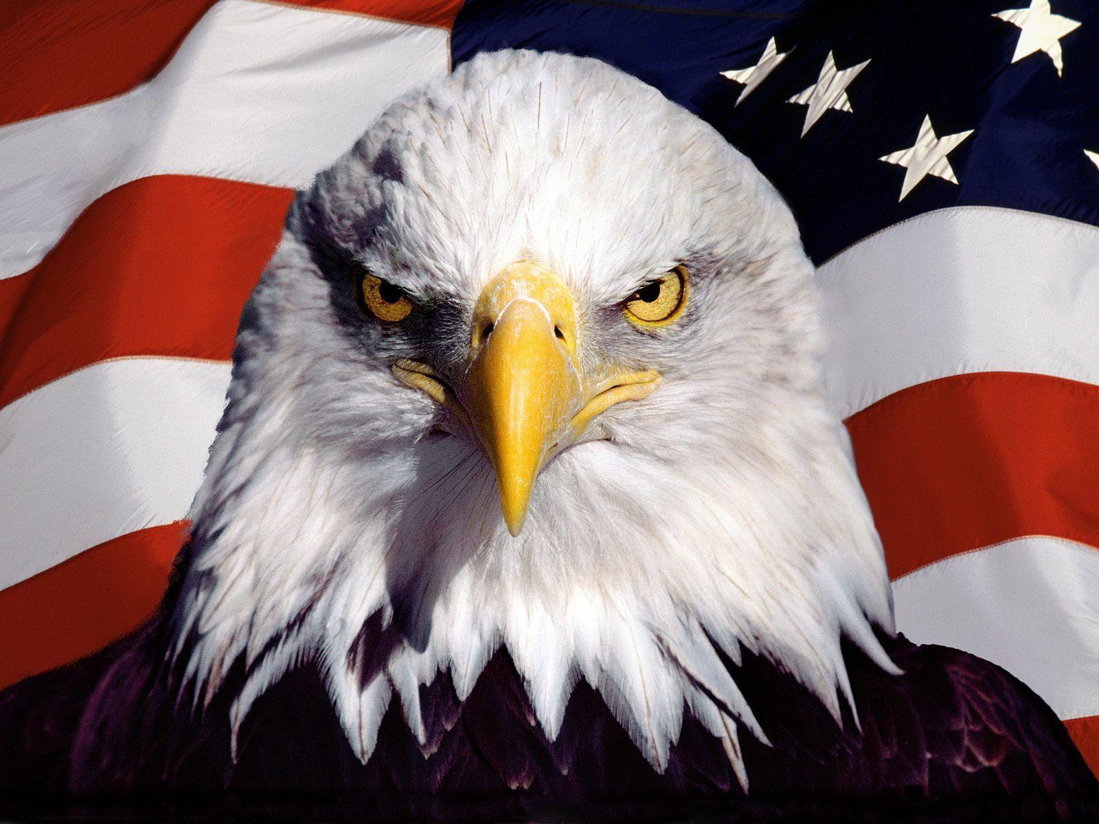 Patriotic Bald Eagle Wallpapers