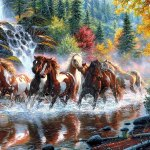 7 Horses Wallpapers Top Free 7 Horses Backgrounds Wallpaperaccess