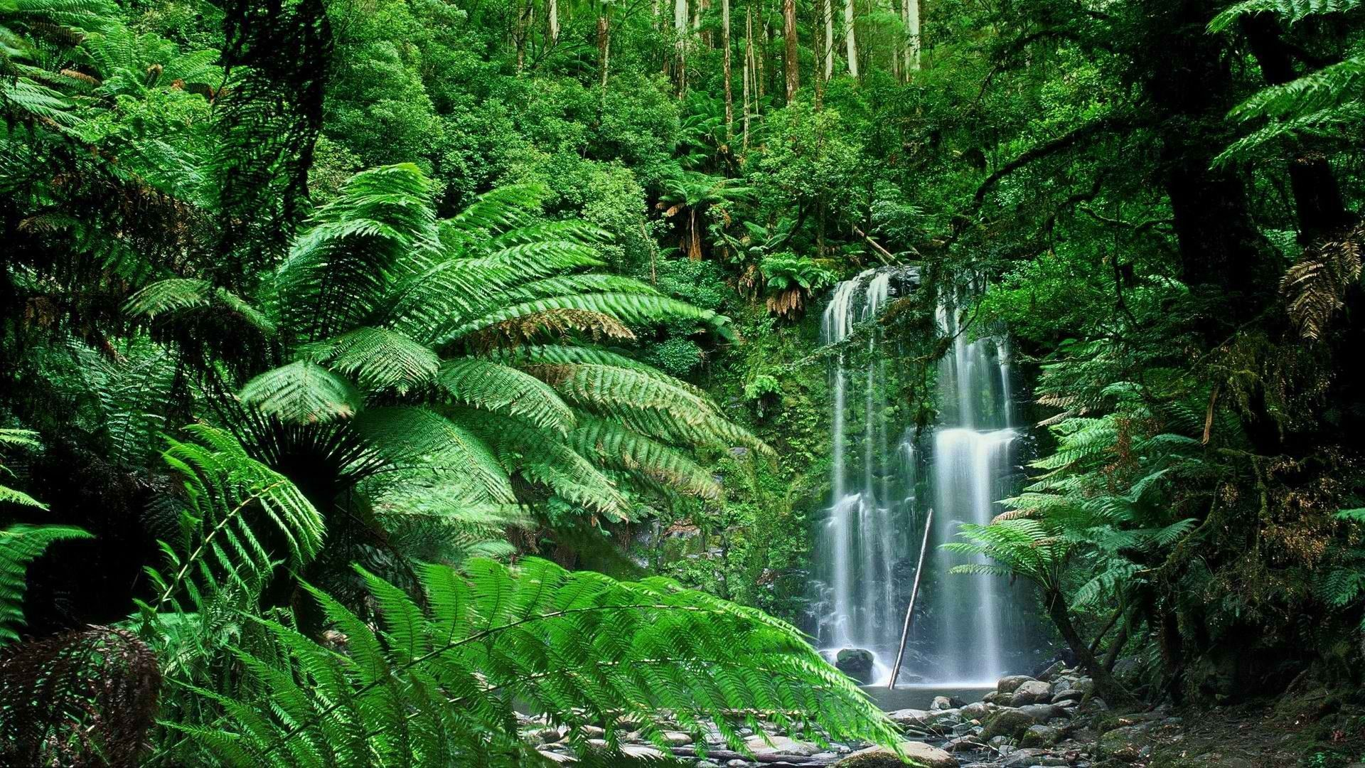 Tropical rainforests represent the oldest major vegetation type still present on the terrestrial earth. Tropical Forest Hd Wallpapers Top Free Tropical Forest Hd Backgrounds Wallpaperaccess