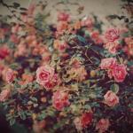 Indie Flower Wallpapers Top Free Indie Flower Backgrounds Wallpaperaccess