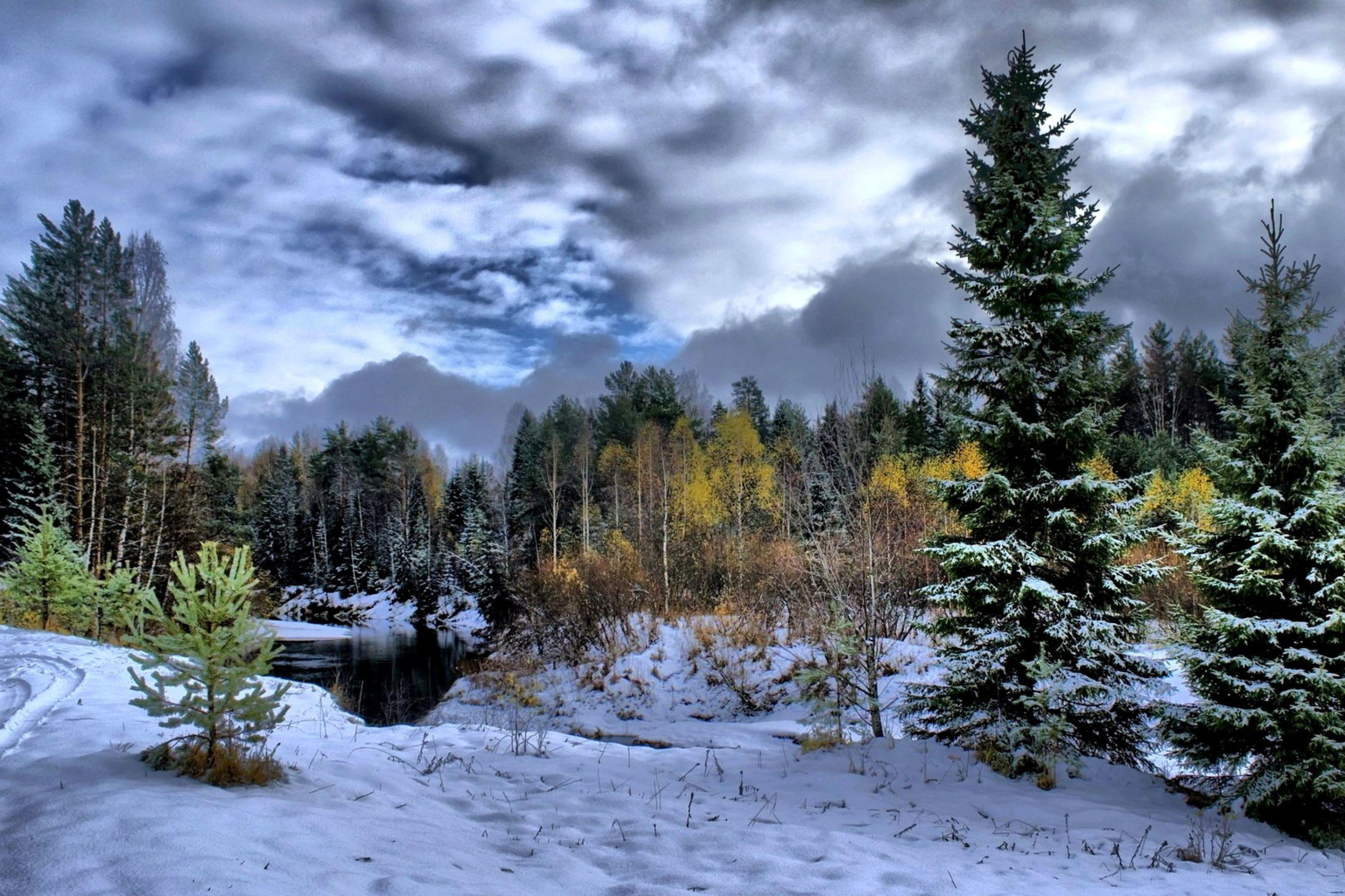 """In europe, finland is a """"forest giant"""", there being over sixteen times more forest per capita than in european countries on average. Boreal Forest Wallpapers Top Free Boreal Forest Backgrounds Wallpaperaccess"""