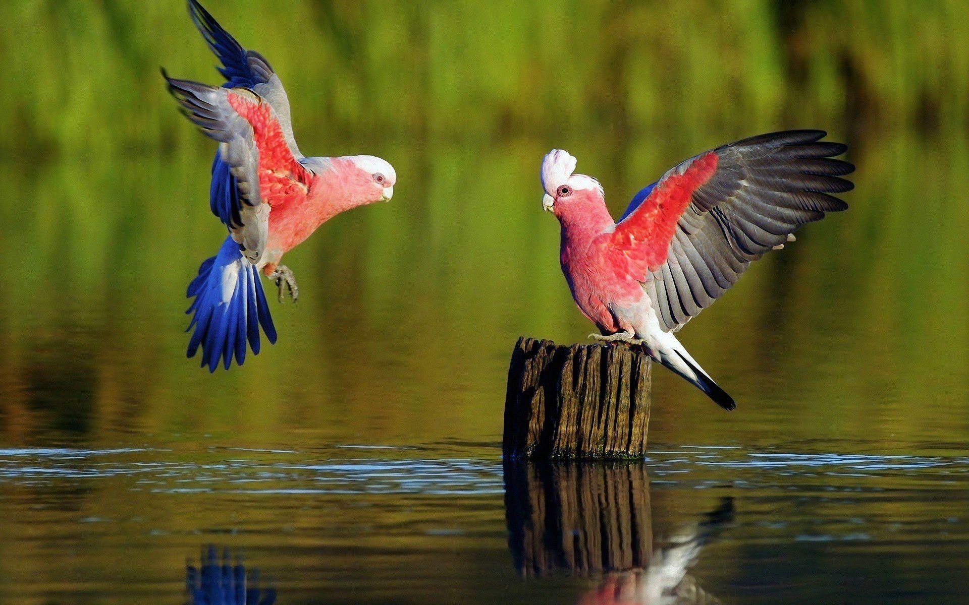 Parrot Bird Wallpapers Top Free Parrot Bird Backgrounds Wallpaperaccess