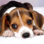 Baby Dog Wallpapers Top Free Baby Dog Backgrounds Wallpaperaccess