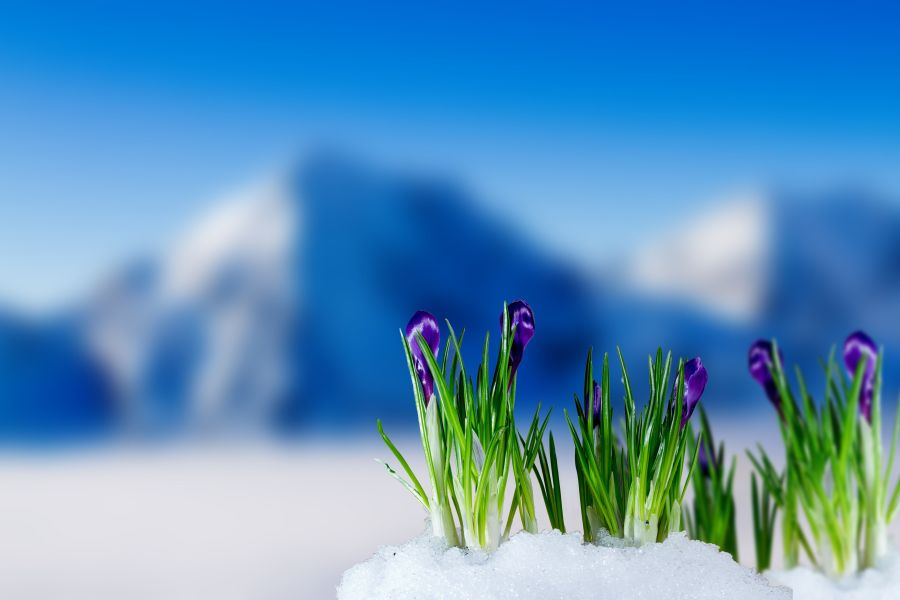 54 Best Free Flowers in Snow Wallpapers   WallpaperAccess 1920x1200
