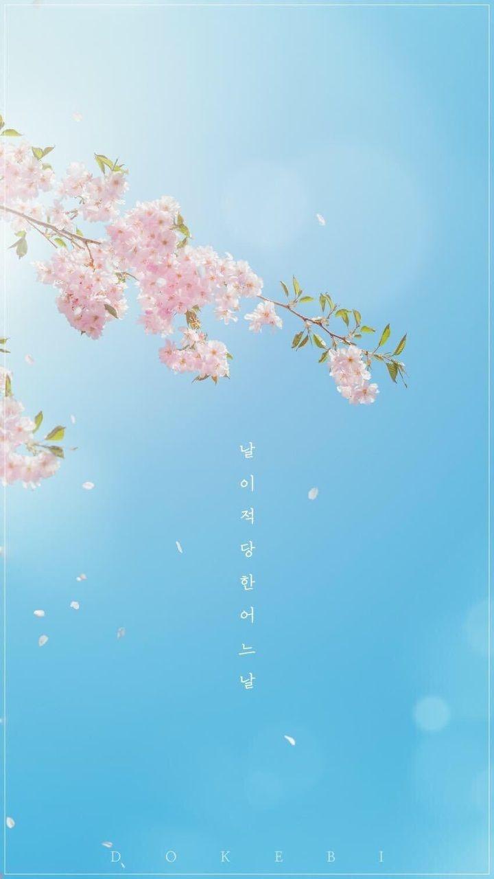 Pastel Aesthetic Wallpaper Korean Novocom Top