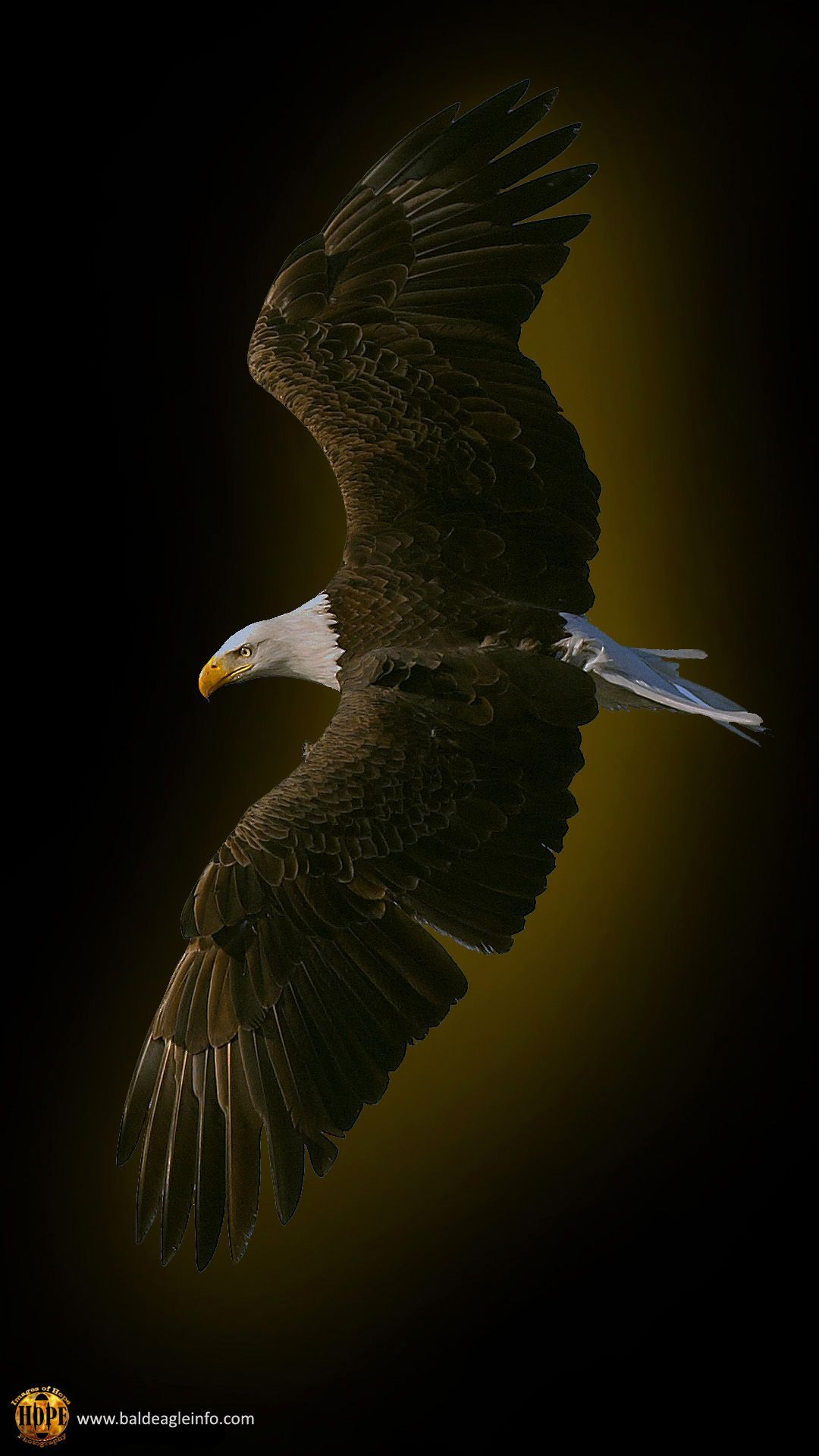 Eagle Astronaut Wallpapers Top Free Eagle Astronaut Backgrounds Wallpaperaccess