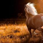 Wild Horses Wallpapers Top Free Wild Horses Backgrounds Wallpaperaccess