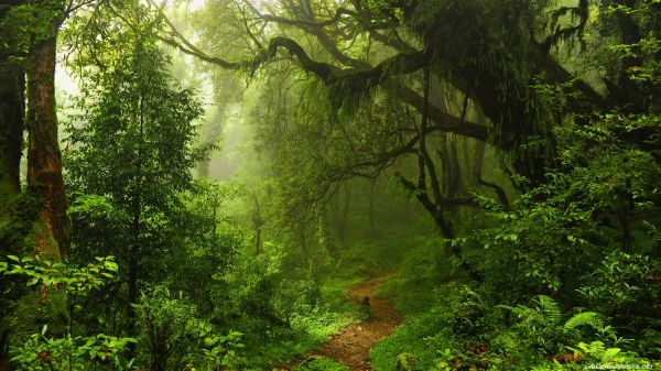 Ultra HD Forest Wallpapers - Top Free Ultra HD Forest ...