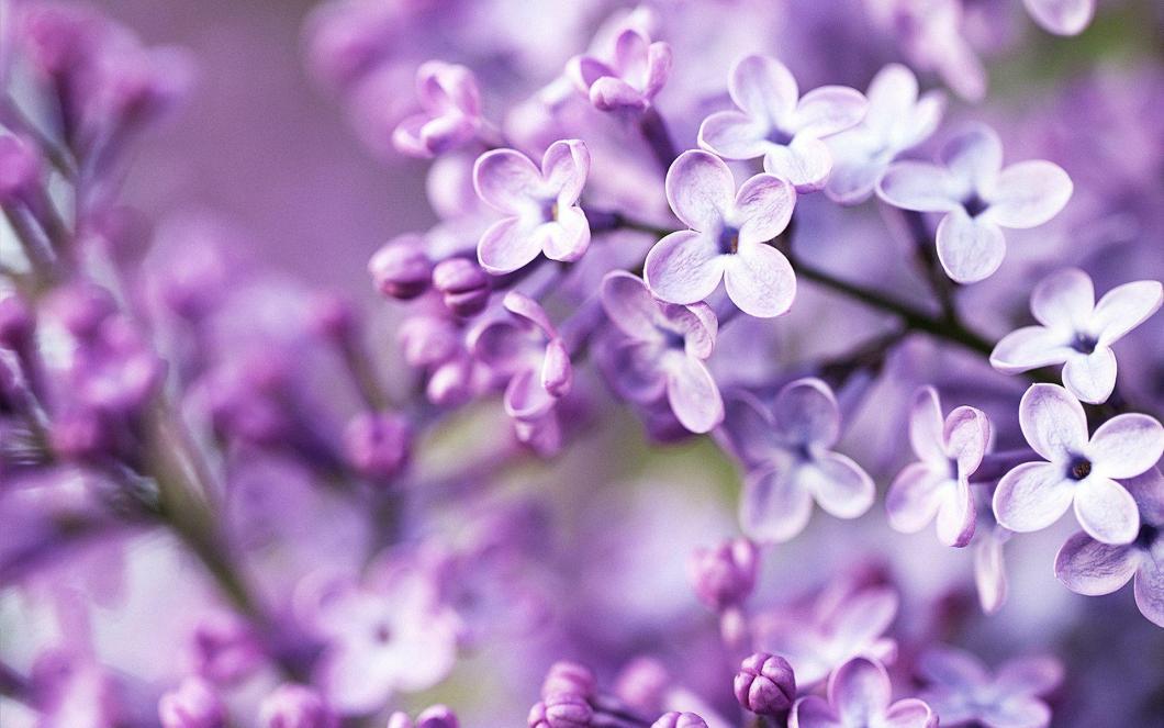 Wallpaper hd purple flowers imagewallpapers purple flowers wallpapers wallpaper cave mightylinksfo