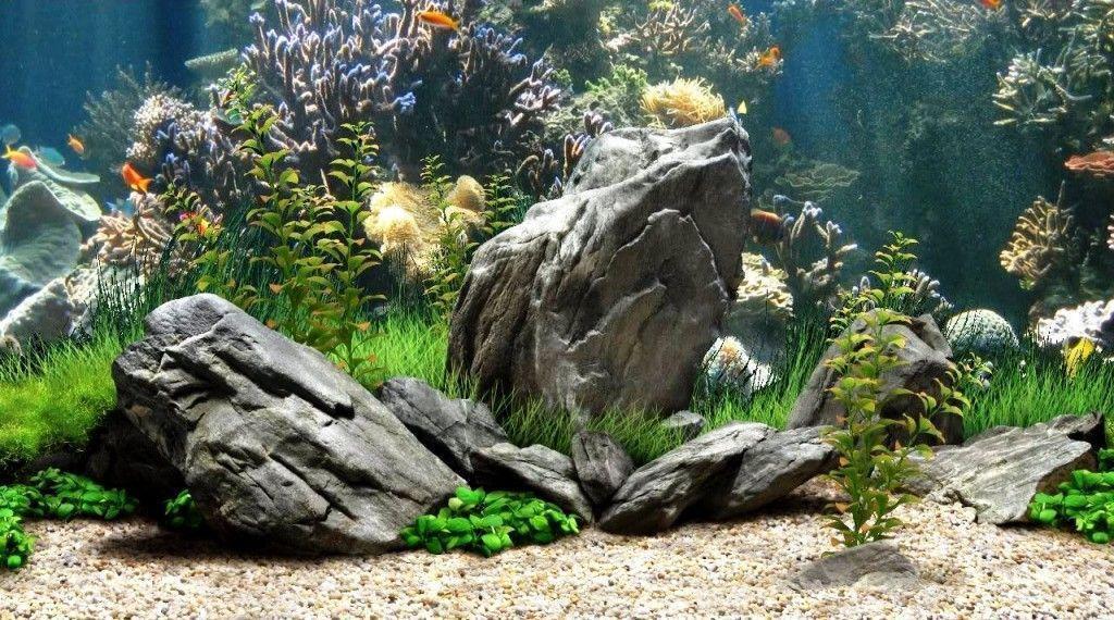 aquarium backgrounds pictures