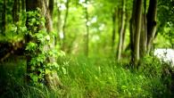Permalink to Hd Green Forest Wallpaper