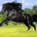 Wild Horse Wallpapers Wallpaper Cave