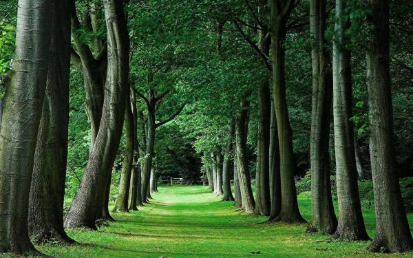 Trees Wallpapers - Wallpaper Cave