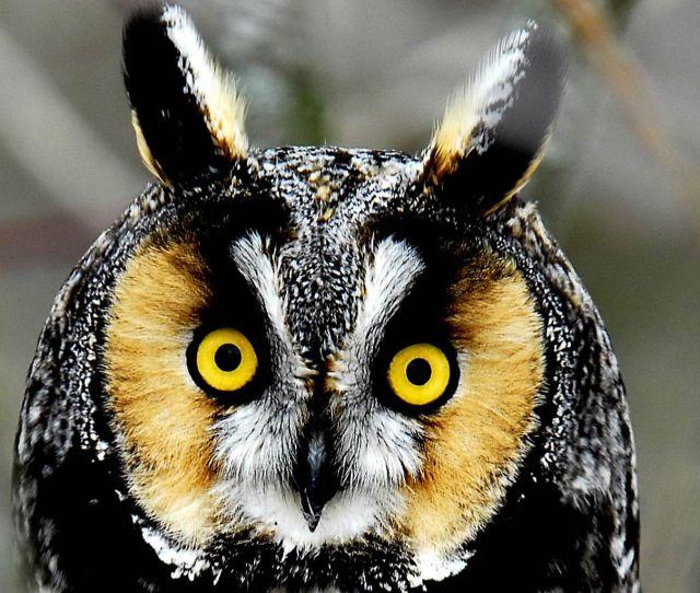 Owl Wallpaper Owl Wallpaper Part