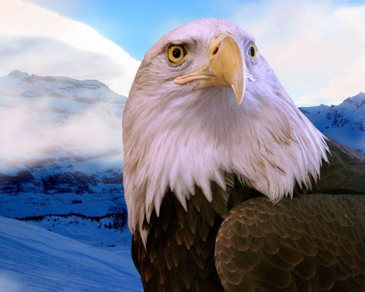 Free Eagle Wallpapers