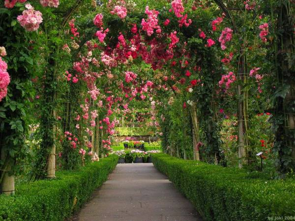 rose garden Rose Garden Wallpapers - Wallpaper Cave