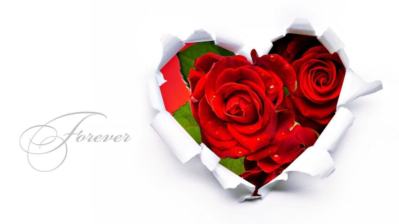 Wallpapers Flower Rose Love   Wallpaper Cave flowers love wallpapers   DriverLayer Search Engine