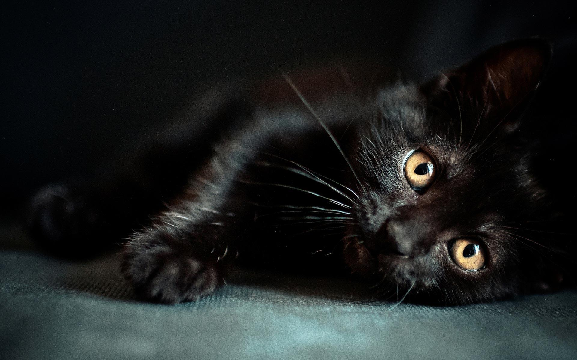 Wallpapers Black Cat   Wallpaper Cave Black Cat Sleep HD Desktop Wallpaper   wallpaper source