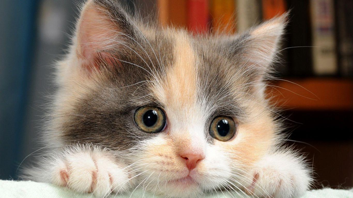 free desktop wallpapers cats - wallpaper cave