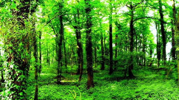 Green Forest Wallpapers - Wallpaper Cave