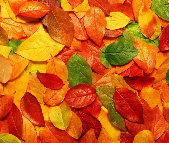 Colorful Autumn Leaves Hd Wallpaper Hd Wallpapers Desktop