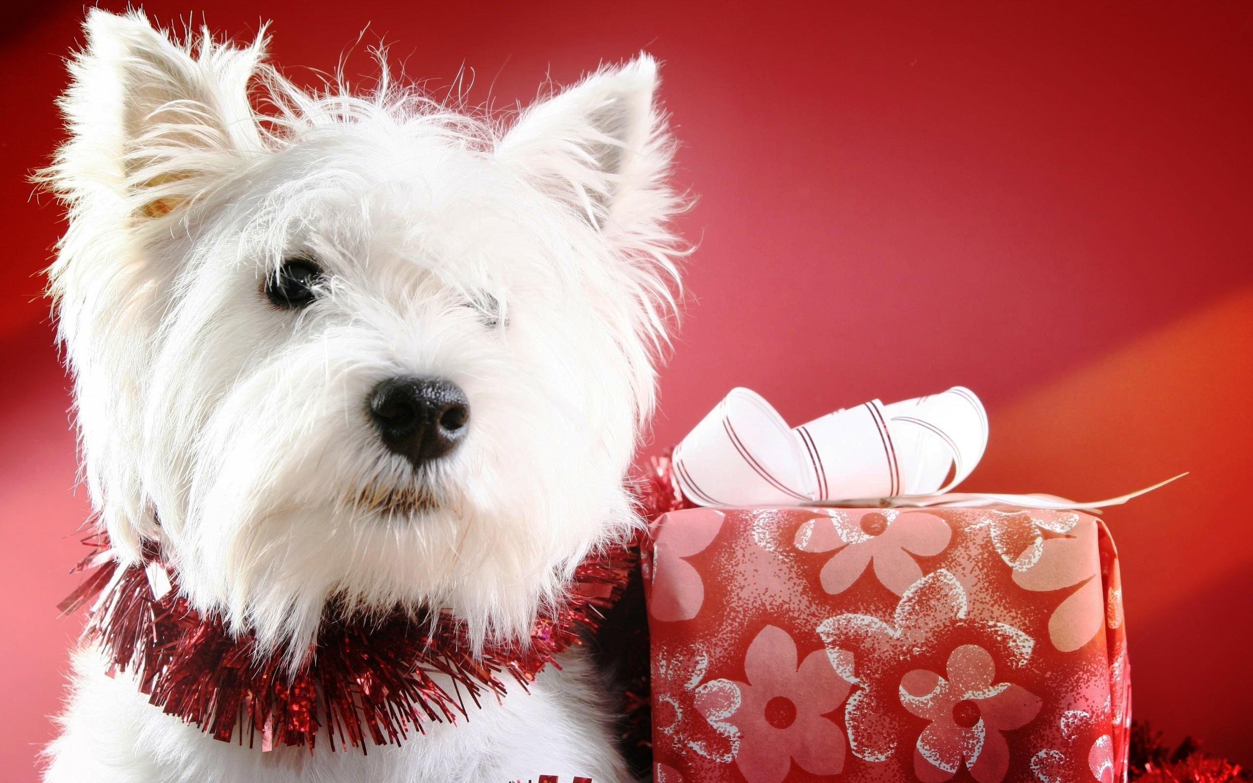 Christmas Puppy Wallpapers Wallpaper Cave