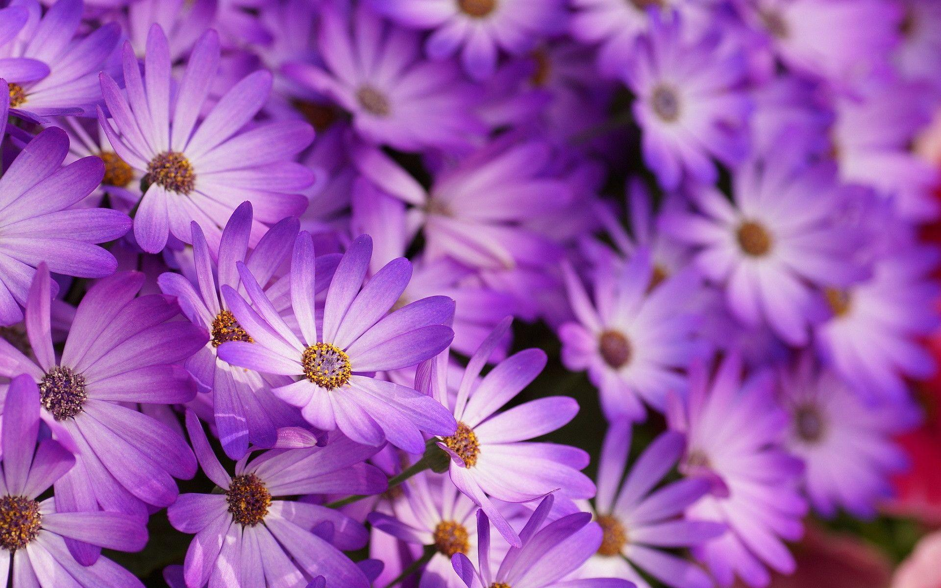 Purple Flowers Wallpapers   Wallpaper Cave Purple Flowers Wallpapers   Full HD wallpaper search   page 8