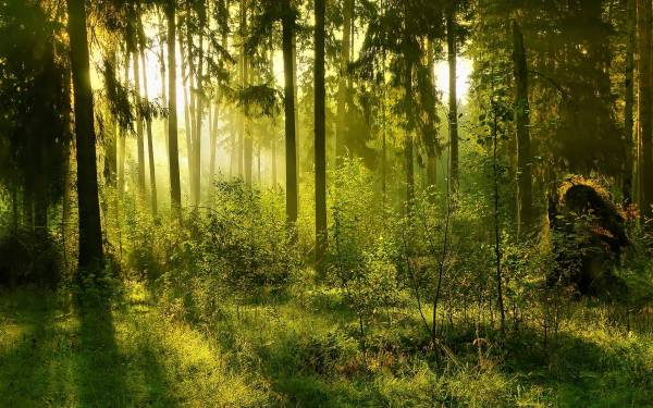 Forest Backgrounds Pictures - Wallpaper Cave