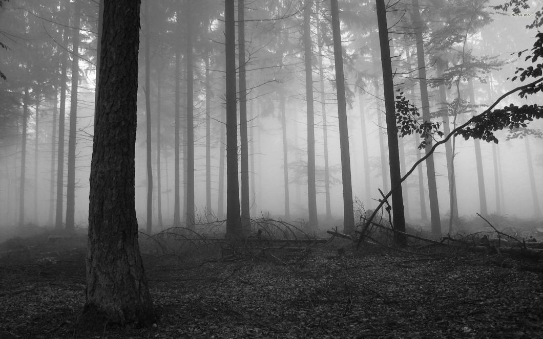 Dark Forest Background Wallpaper