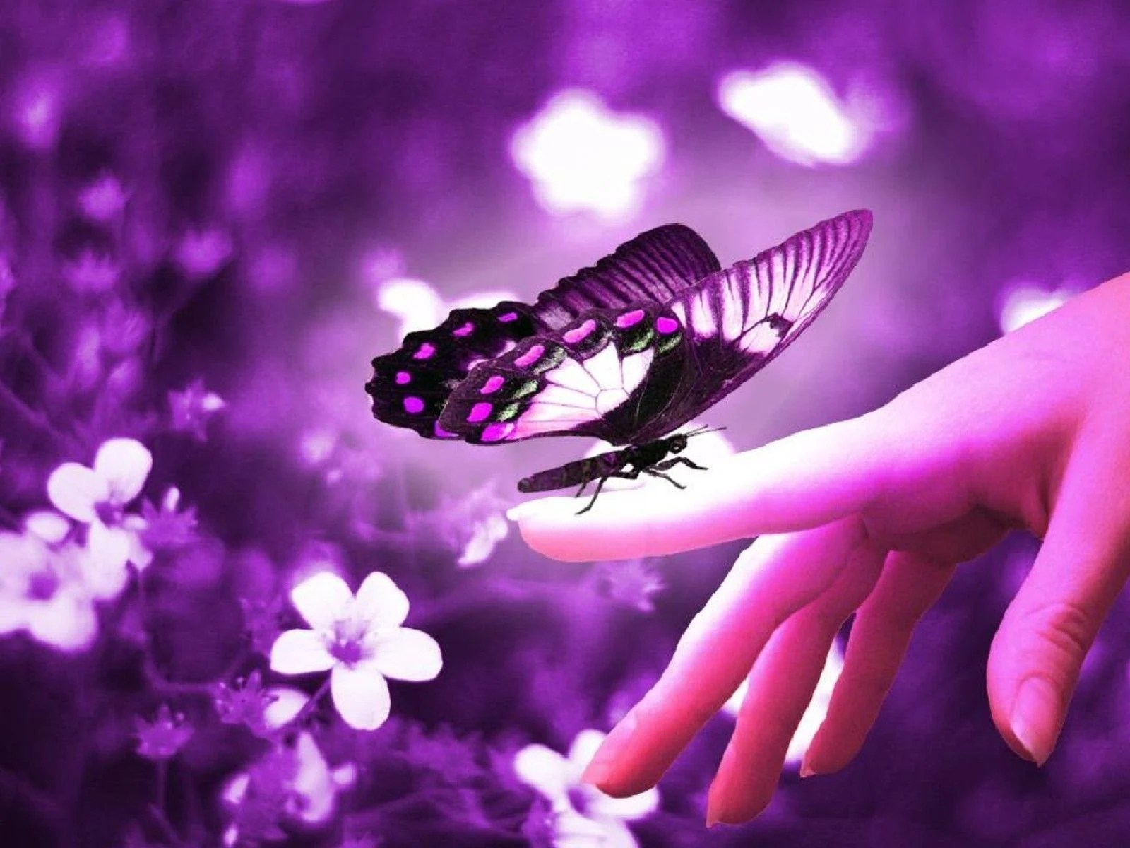 Beautiful Butterfly Wallpapers   Wallpaper Cave Beautiful Butterflies   Butterflies Wallpaper  9481170    Fanpop