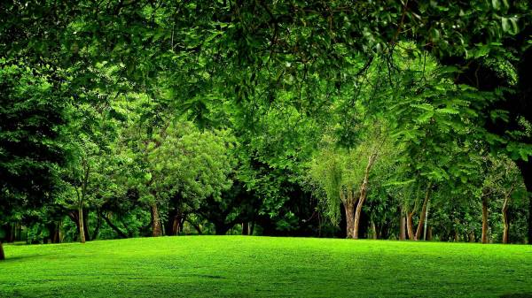 Green Forest Backgrounds - Wallpaper Cave