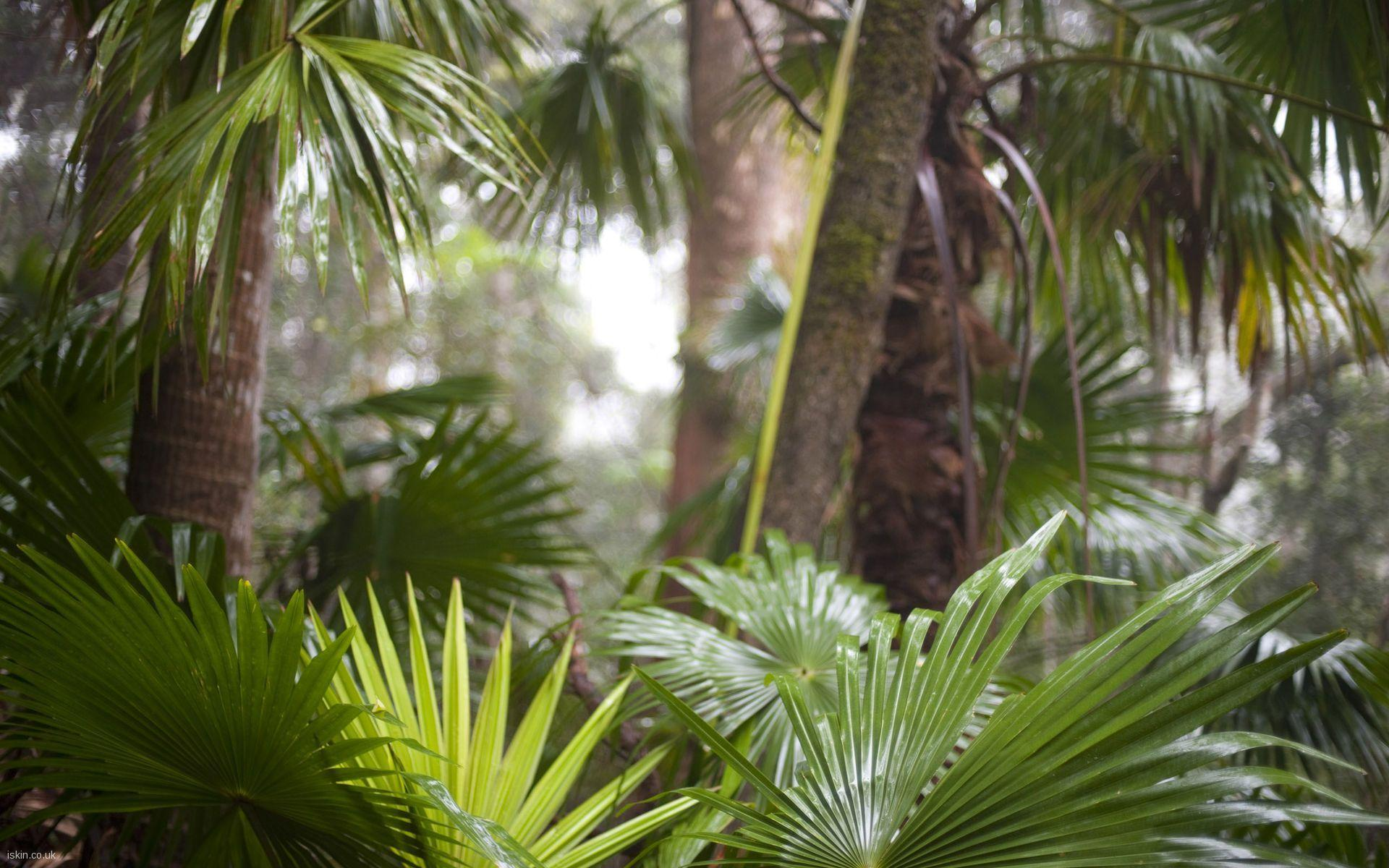 The most important autotrophs for the carbon cycle are. Tropical Rainforest Wallpapers Wallpaper Cave