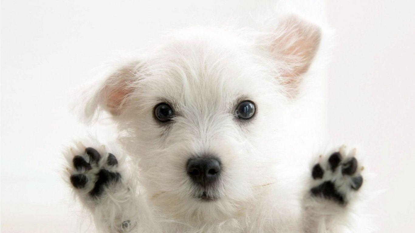 Image of: Pet Cute White Funny Dog Wallpaper Imgstockscom Wallpaper Cave Funny Dog Wallpapers Wallpaper Cave