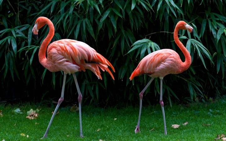 Pink Flamingo Wallpapers | allofpicts