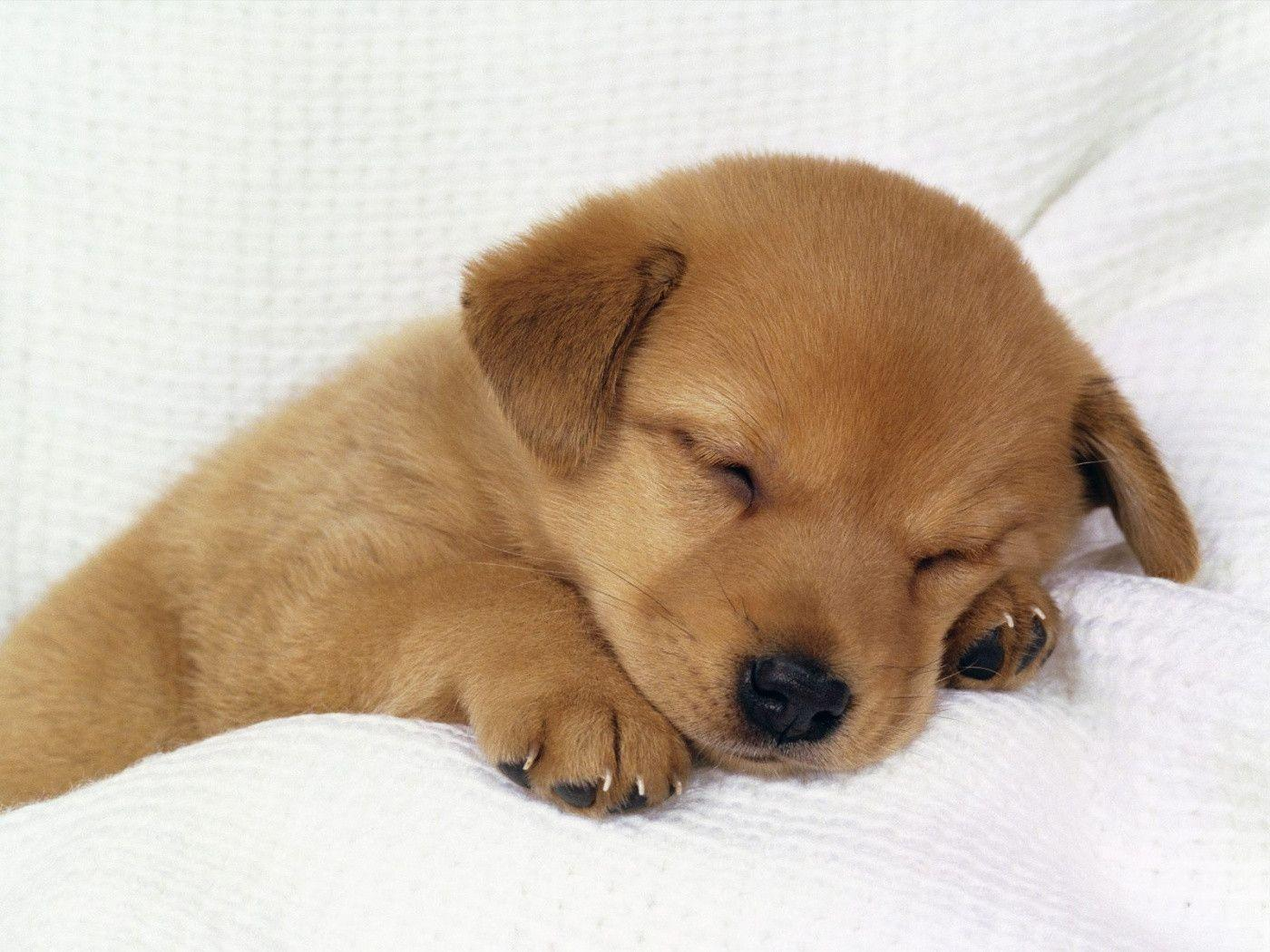 Cute Puppy Backgrounds   Wallpaper Cave Wallpapers For   Cute Puppy Desktop Background