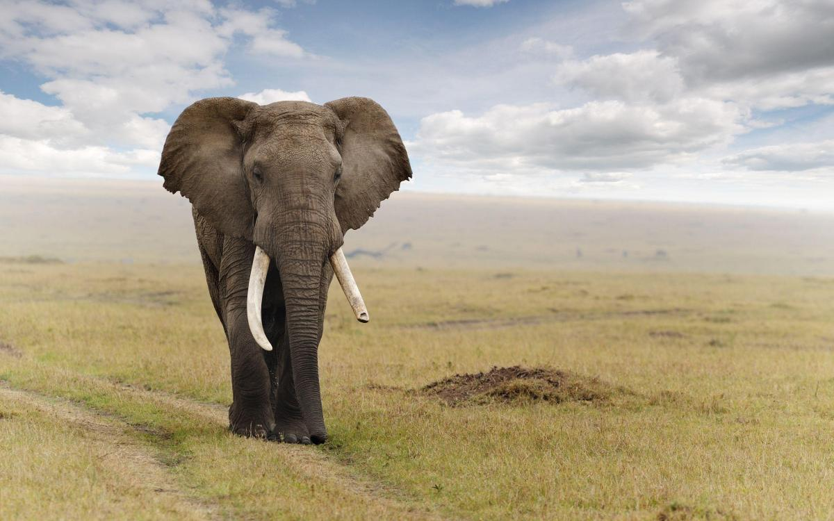 305 Elephant Wallpapers