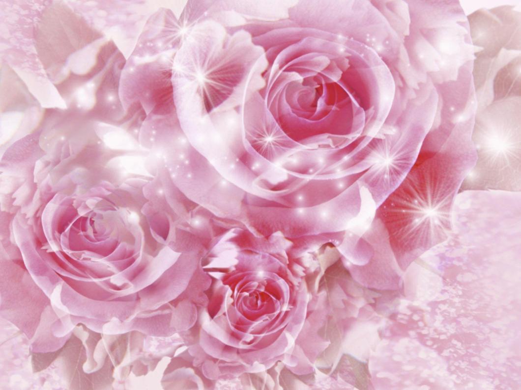 Wallpaper rose flower beauty imagewallpapers beautiful pink wallpapers wallpaper cave izmirmasajfo