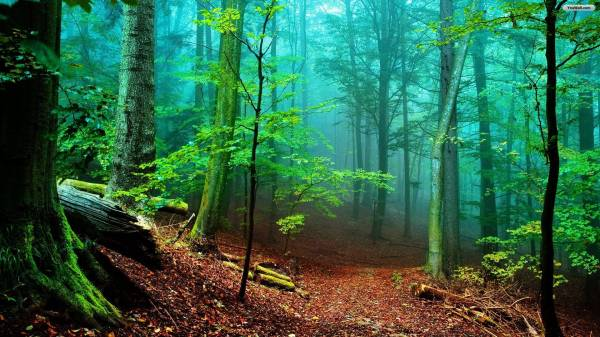 HD Forest Wallpapers - Wallpaper Cave