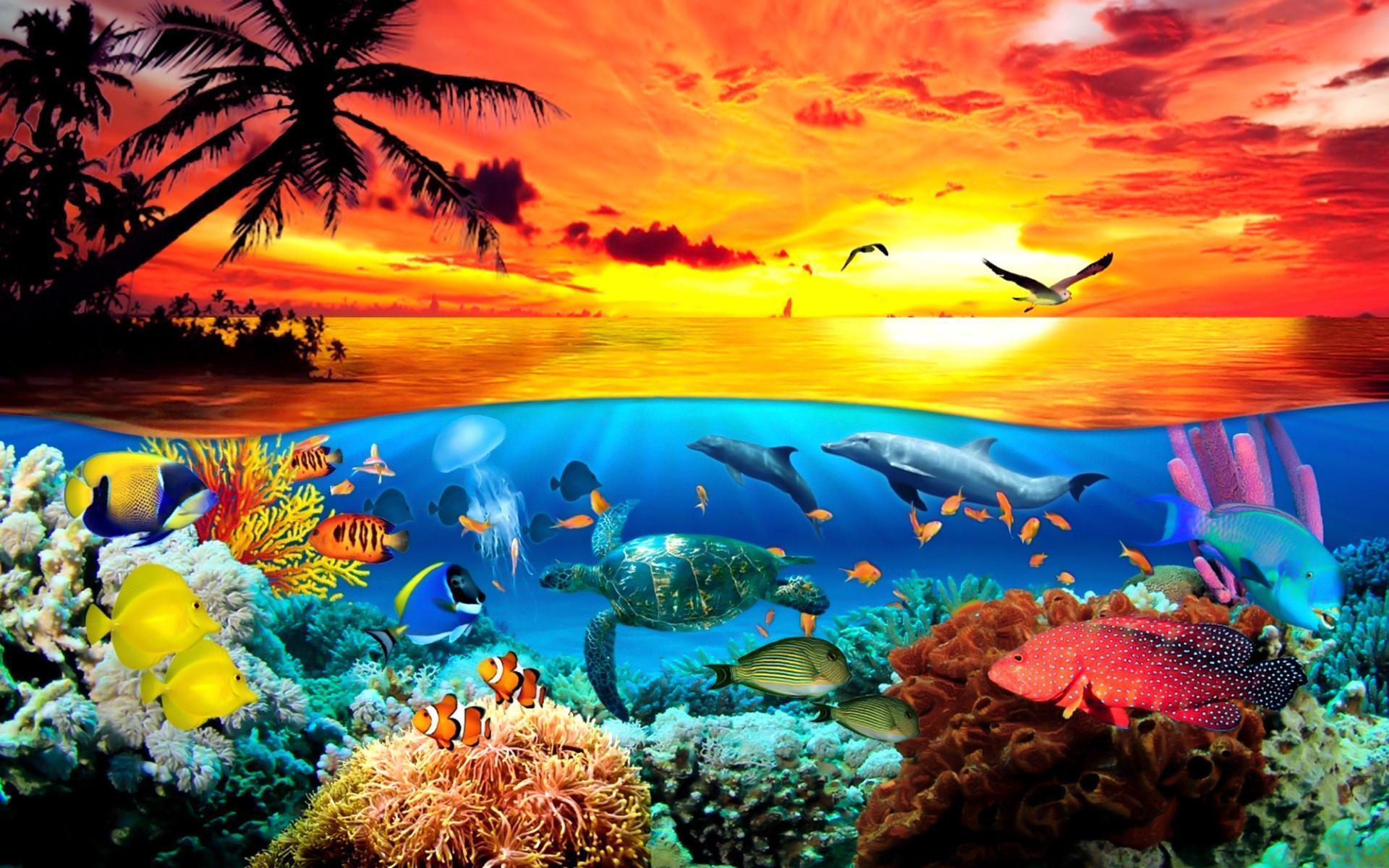 Sea Animals Wallpapers